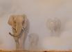 Art Wolfe and Dr. Samuel Wasser: Saving the Wild Elephants, TRT 1:09  recorded 1/29/20
