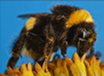 Dave Goulson: What's Happening to the Bees?, TRT :58  recorded 10/19/15