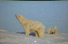 Steven Kazlowski: The Last Polar Bear: Facing the Truth of a Warming World